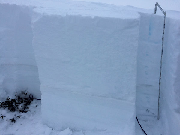 Snow test pit Hotham