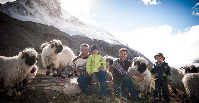 Three generations of the Julen family tending their Black Nose Sheep flock in Zermatt