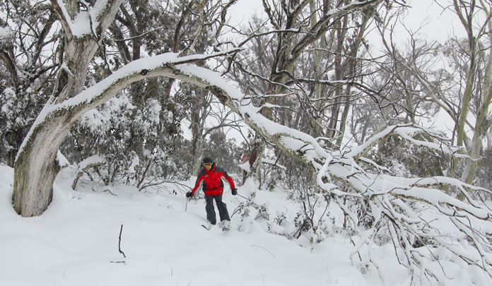 Tree skiing at Selwyn Snow Resort