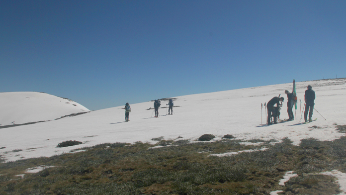Fitting skins at the snowline on Mt Bogong in spring